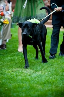 Colorado Pet Friendly Wedding Ceremony