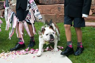 Ashley Davis Dog Ringbearer Colorado