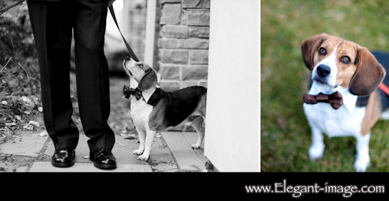 Elegant Images Lionscrest Pet Friendly Wedding Ceremony